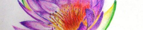 cropped-nurse-flower.jpg