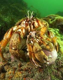 Hermit Crabs Photo