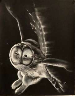 Owl, by Conor Broderick